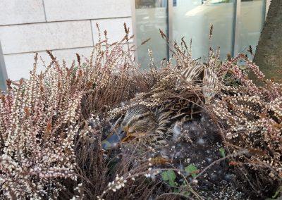 ibland-ar-det-inte-sa-latt-att-plantera(1)