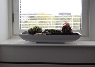 kaktusmix-planterad-i-pandora-21038