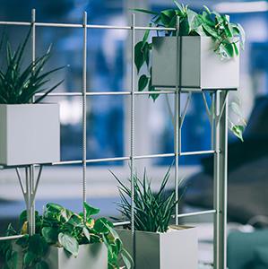 Skapa en grön miljö med företagsväxter