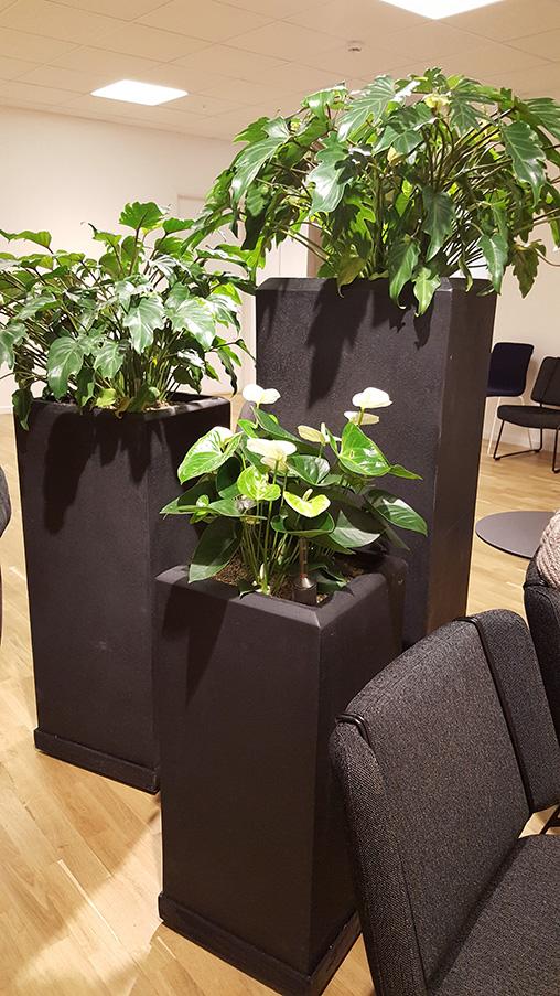 Kontorsväxter med Blomsterfröjd Inredningar AB