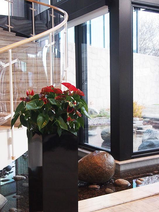Exempel på bra växter för kontor som en del av växtinredning