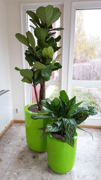 Växter på kontoret - växtinredning betalar för sig självt!