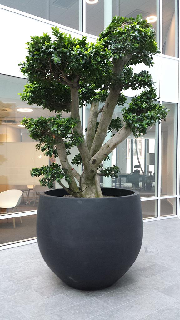 Växtinredning till kontor från Blomsterfröjd
