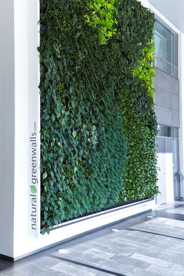 Natural Greenwalls producerar det mest hygieniska valet för växtväggar